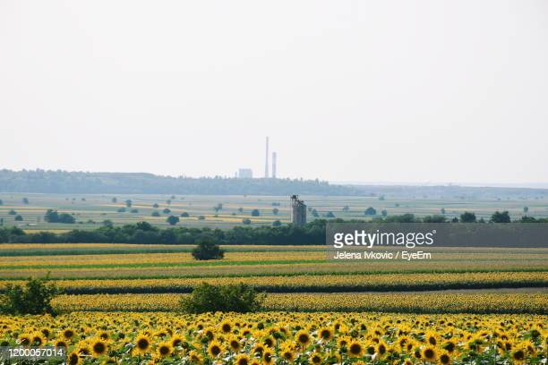 scenic view of field against clear sky - jelena ivkovic stock pictures, royalty-free photos & images