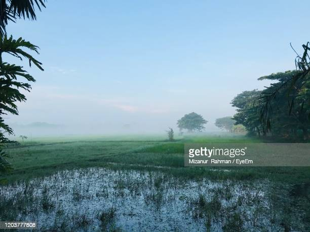 scenic view of field against clear sky - mizanur rahman stock pictures, royalty-free photos & images