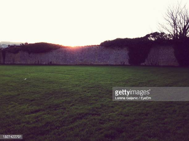 scenic view of field against clear sky - lorena day stock pictures, royalty-free photos & images