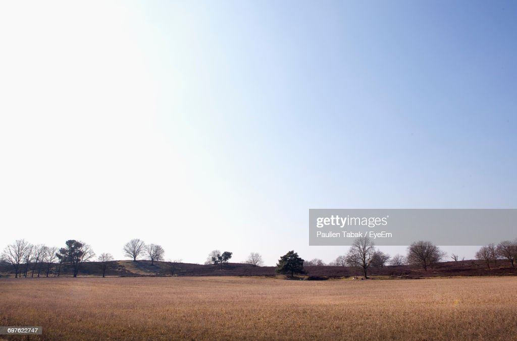 Scenic View Of Field Against Clear Sky : Stockfoto