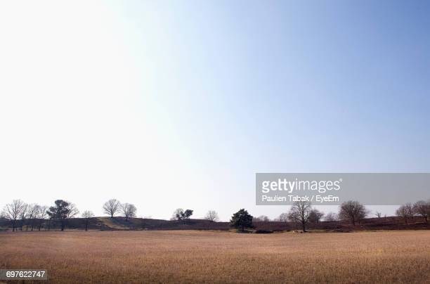 scenic view of field against clear sky - paulien tabak foto e immagini stock