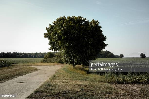 scenic view of field against clear sky - albrecht schlotter stock photos and pictures