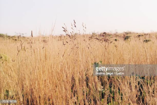 scenic view of field against clear sky - brianne stock pictures, royalty-free photos & images