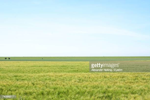 scenic view of field against clear sky - prado - fotografias e filmes do acervo