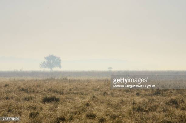 scenic view of field against clear sky - monika gregussova stock pictures, royalty-free photos & images