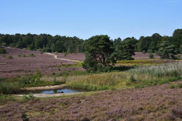 Scenic view of field against clear sky,Heerlen,Netherlands