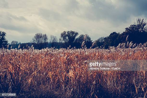 scenic view of field against cloudy sky - albrecht schlotter stock photos and pictures