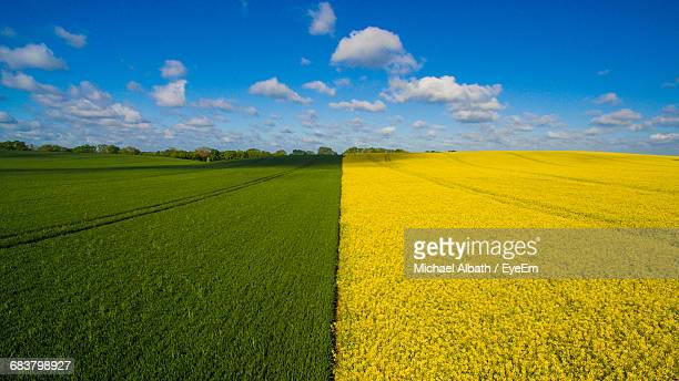scenic view of field against cloudy sky - contrasti foto e immagini stock