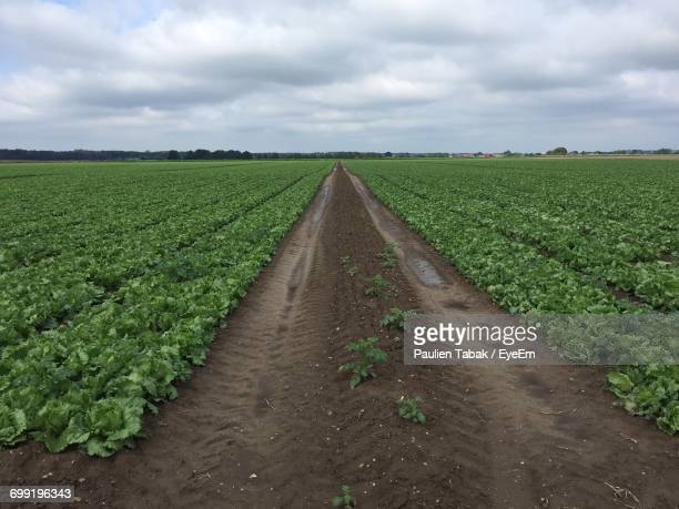 scenic view of field against cloudy sky - paulien tabak stock pictures, royalty-free photos & images