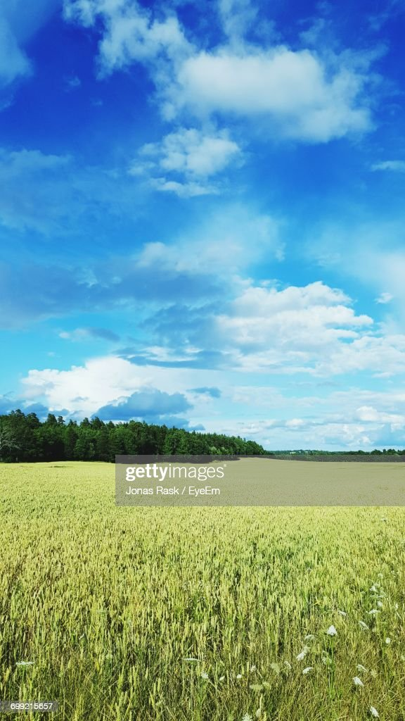 Scenic View Of Field Against Cloudy Sky : Foto de stock
