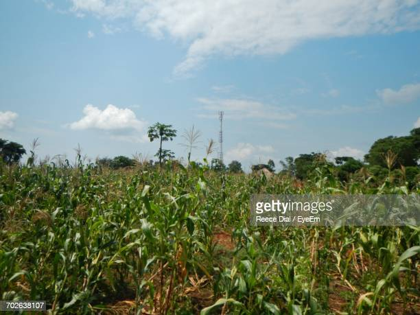 scenic view of field against cloudy sky - gulu stock photos and pictures