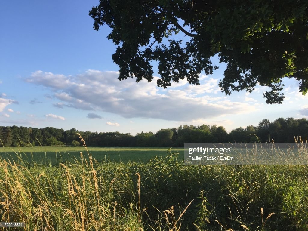 Scenic View Of Field Against Cloudy Sky : Stockfoto