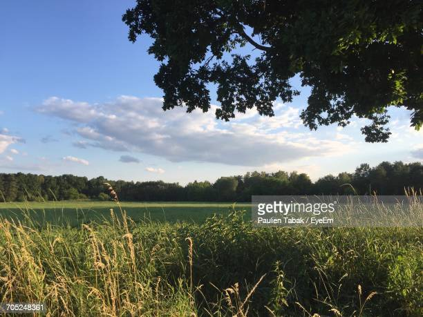 scenic view of field against cloudy sky - paulien tabak photos et images de collection