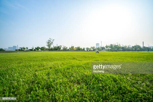 scenic view of field against cloudy sky - park stock-fotos und bilder