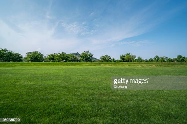 scenic view of field against cloudy sky - 公園 ストックフォトと画像