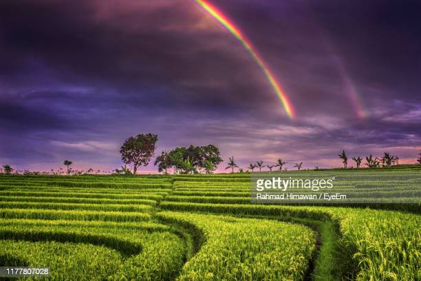 scenic view of field against rainbow in sky - rahmad himawan fotografías e imágenes de stock