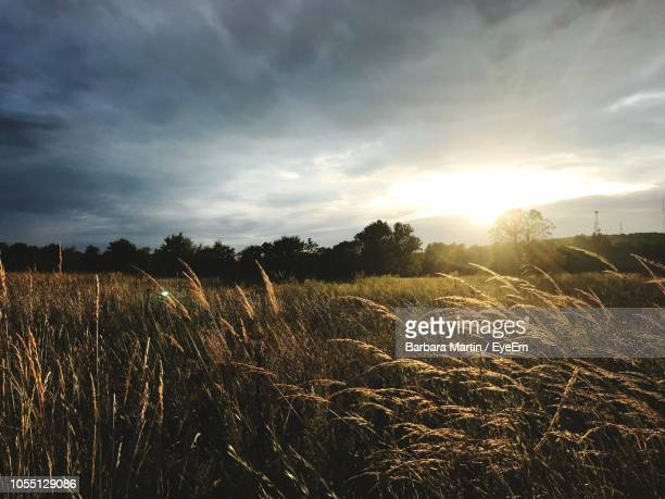 scenic view of field against sky at sunset - oklahoma - fotografias e filmes do acervo