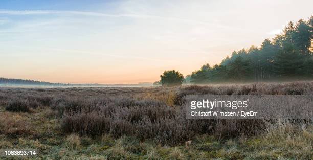 scenic view of field against sky at sunset - west flanders stock pictures, royalty-free photos & images