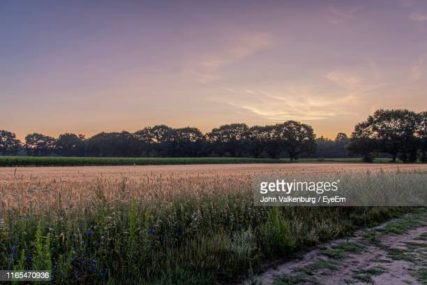 scenic view of field against sky at sunset - gelderland stock pictures, royalty-free photos & images
