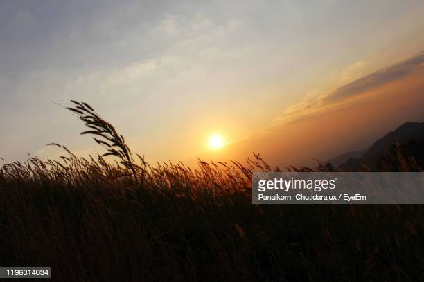 scenic view of field against sky at sunset - panaikorn chutidaralux stock photos and pictures
