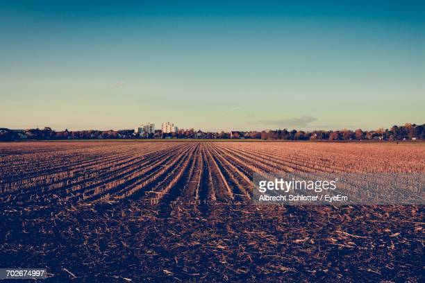scenic view of field against sky at sunset - albrecht schlotter foto e immagini stock