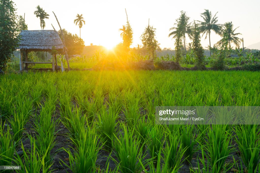 Scenic View Of Field Against Sky At Sunset : Stock Photo