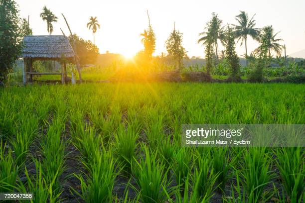 scenic view of field against sky at sunset - shaifulzamri stock pictures, royalty-free photos & images