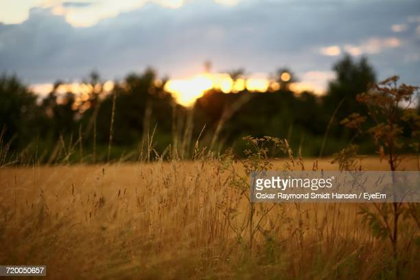 scenic view of field against sky at sunset - oskar stock pictures, royalty-free photos & images