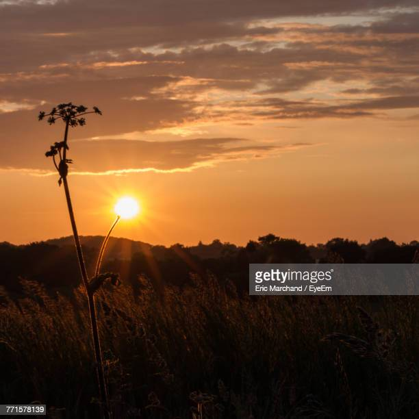 Scenic View Of Field Against Sky At Sunset