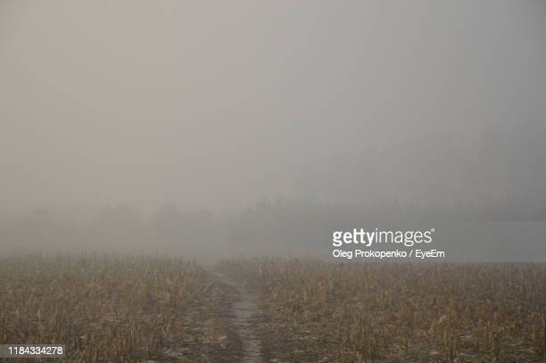 scenic view of field against sky during foggy weather - oleg prokopenko stock pictures, royalty-free photos & images
