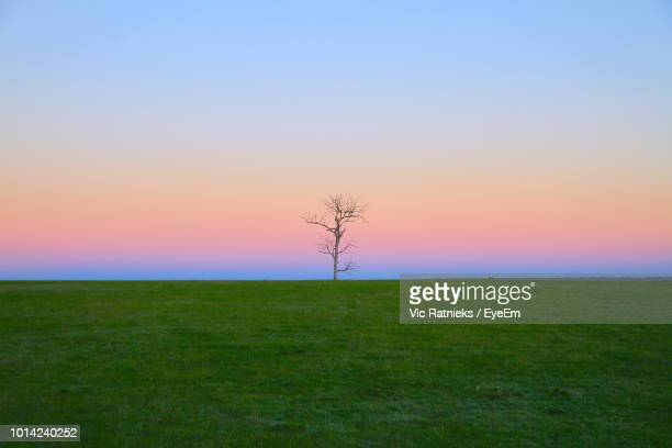 scenic view of field against sky during sunset - ratnieks stock pictures, royalty-free photos & images