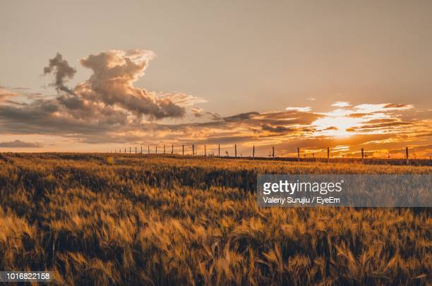 scenic view of field against sky during sunset - eyeem stock pictures, royalty-free photos & images