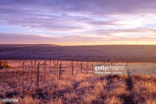 scenic view of field against sky during sunset - rachel wolfe stock pictures, royalty-free photos & images