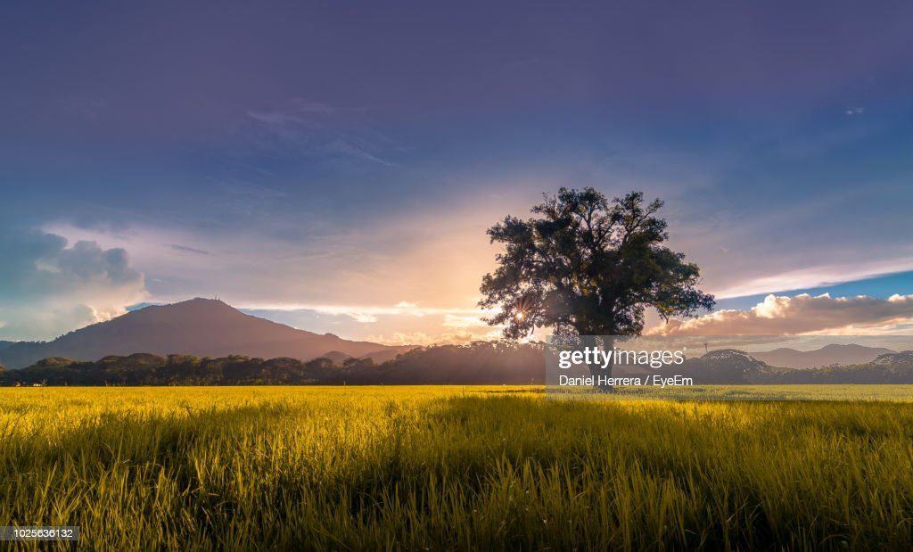 Scenic View Of Field Against Sky During Sunset : Foto de stock
