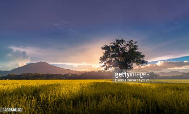 scenic view of field against sky during sunset - guanacaste stock pictures, royalty-free photos & images