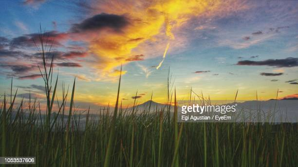 Tall Grass Field Sunset In Scenic View Of Field Against Sky During Sunset Tall Grass Silhouette Background Stock Photos And Pictures Getty