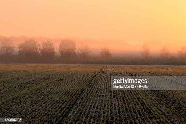 scenic view of field against sky during sunset - van dijk stock pictures, royalty-free photos & images