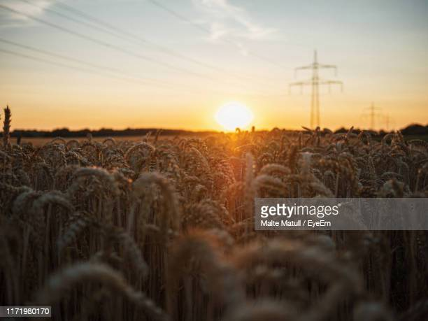 scenic view of field against sky during sunset - nordrhein westfalen stock-fotos und bilder
