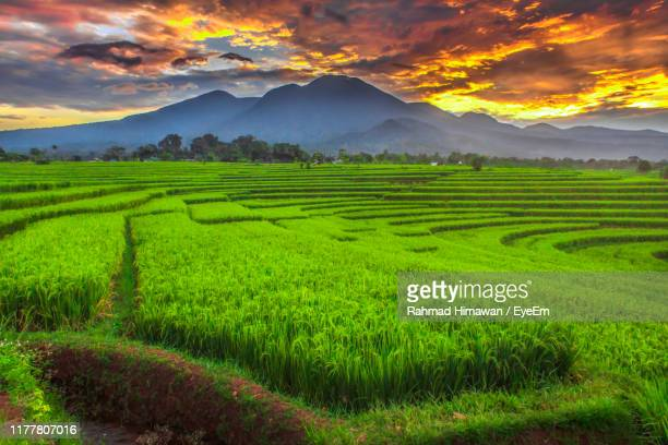scenic view of field against sky during sunset - rahmad himawan stock photos and pictures