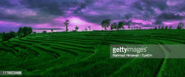scenic view of field against sky during sunset - rahmad himawan fotografías e imágenes de stock