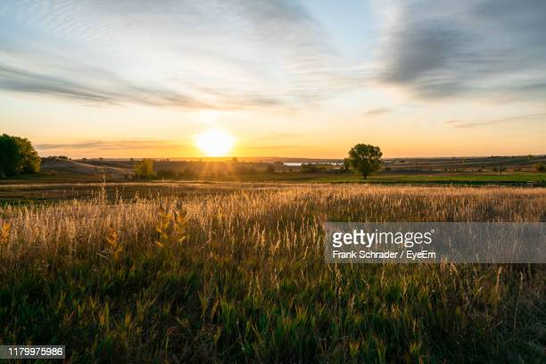 scenic view of field against sky during sunset - frank schrader stock pictures, royalty-free photos & images