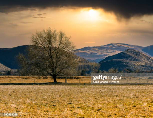 scenic view of field against sky during sunset - nevada stock pictures, royalty-free photos & images