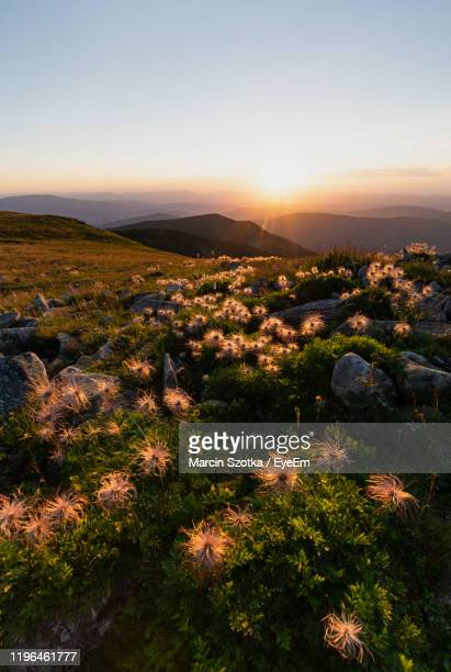 scenic view of field against sky during sunset - babia góra mountain stock pictures, royalty-free photos & images