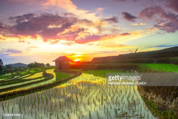 scenic view of field against sky during sunset - rahmad himawan stock pictures, royalty-free photos & images