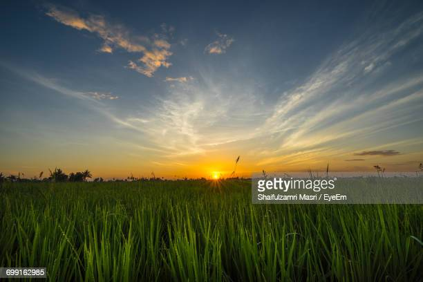 scenic view of field against sky during sunset - shaifulzamri stock pictures, royalty-free photos & images