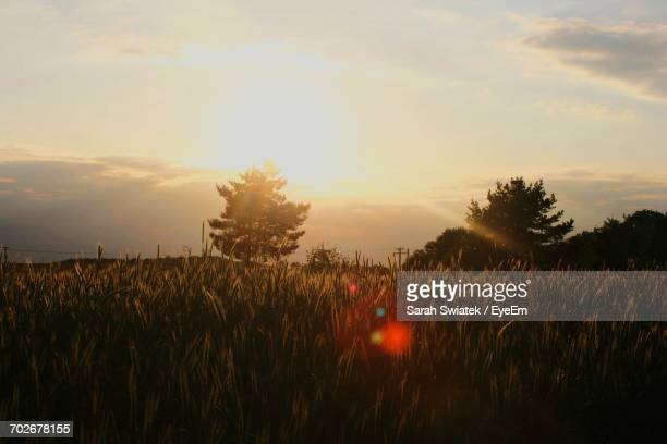 scenic view of field against sky during sunset - swiatek stock pictures, royalty-free photos & images