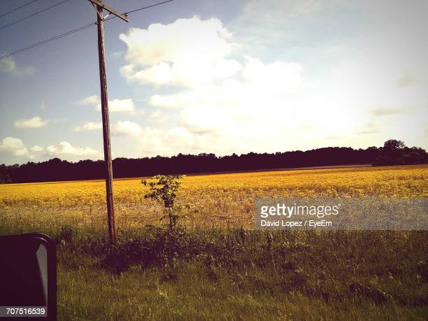 scenic view of field against sky during sunset - lopez stock pictures, royalty-free photos & images