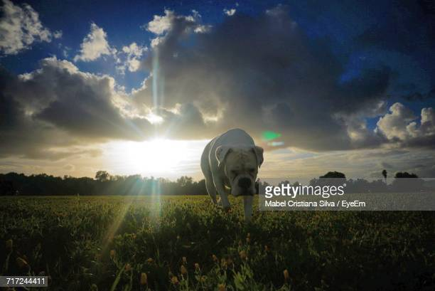 scenic view of field against sky during sunset - mabel ray stock photos and pictures