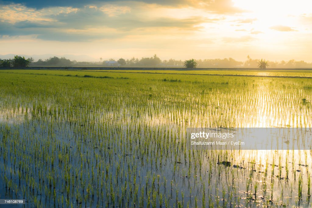 Scenic View Of Field Against Sky During Sunset : Stock Photo