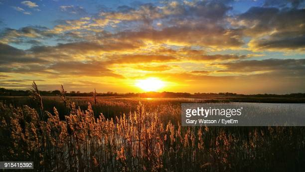 scenic view of field against sky during sunset - east anglia stock pictures, royalty-free photos & images
